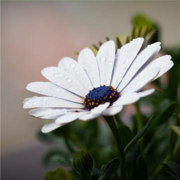 fleur paysagiste